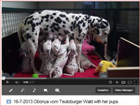 knipsel obonya with her pups