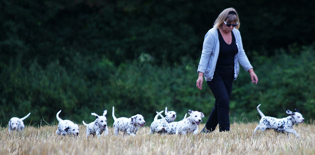 Mieke walking the pups