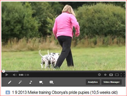 Mieke training the pups